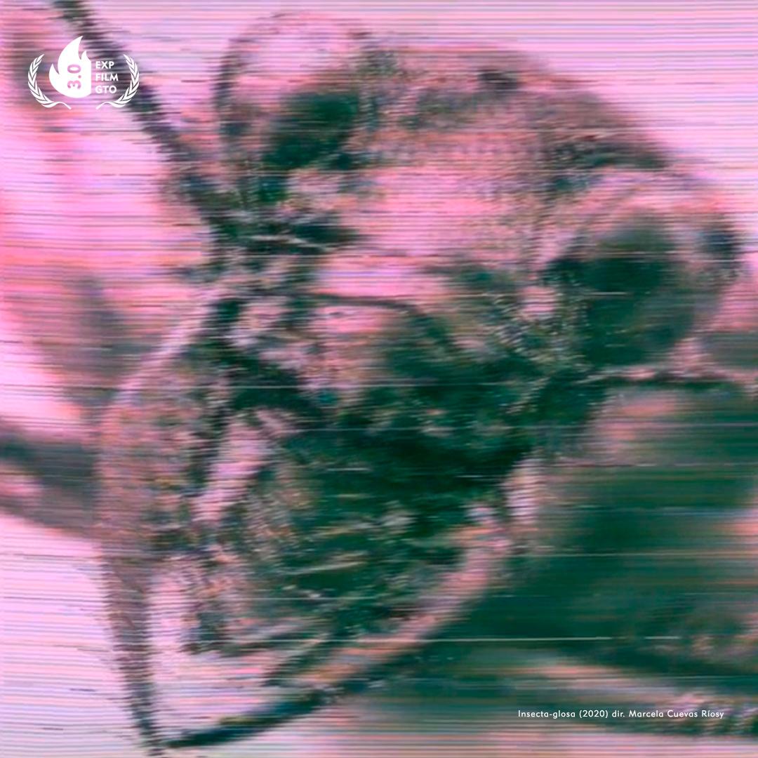 Insecta-glosa-Experimental-Film-Guanajuato-2020-Exp-Film-Gto-Retransmision
